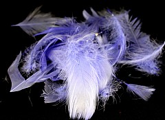 Large pack of Feathers, LILAC